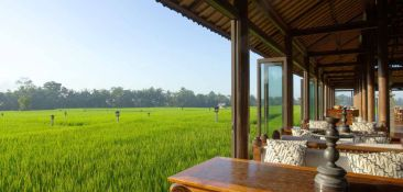 restaurant-rice-paddy-view
