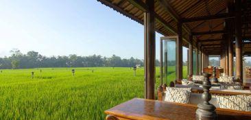 restaurant-rice-paddy-view