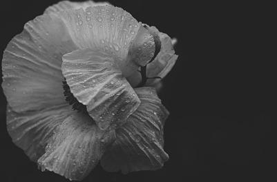 flower-1778787_960_720