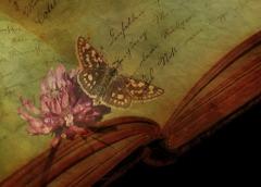 book background 1